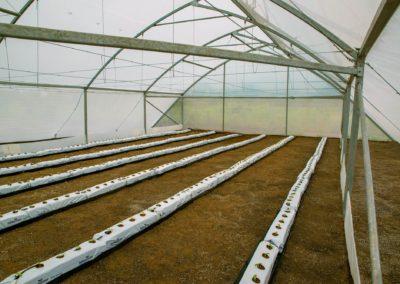 Greenhouse (10)