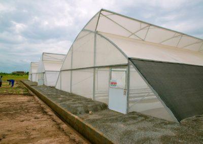 Greenhouse (12)