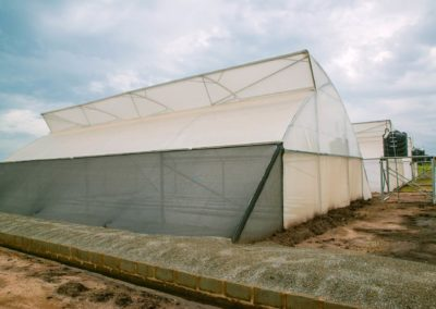Greenhouse (13)