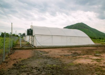 Greenhouse (5)