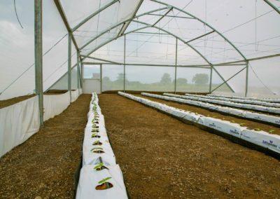 Greenhouse (7)