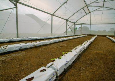 Greenhouse (8)