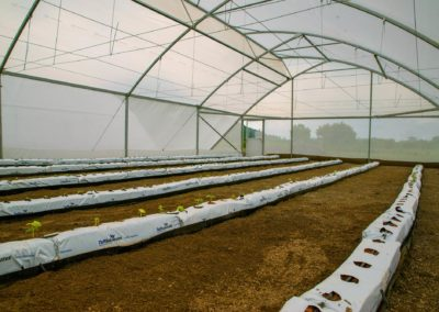 Greenhouse (9)