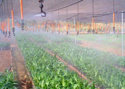 Nurseries (2)+sprinklers